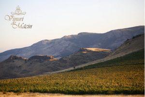alcovin macin winemaker 1